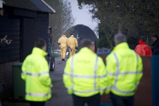 Dutch Cull Ducks Amid Bird Flu Fears in Poultry Heartland