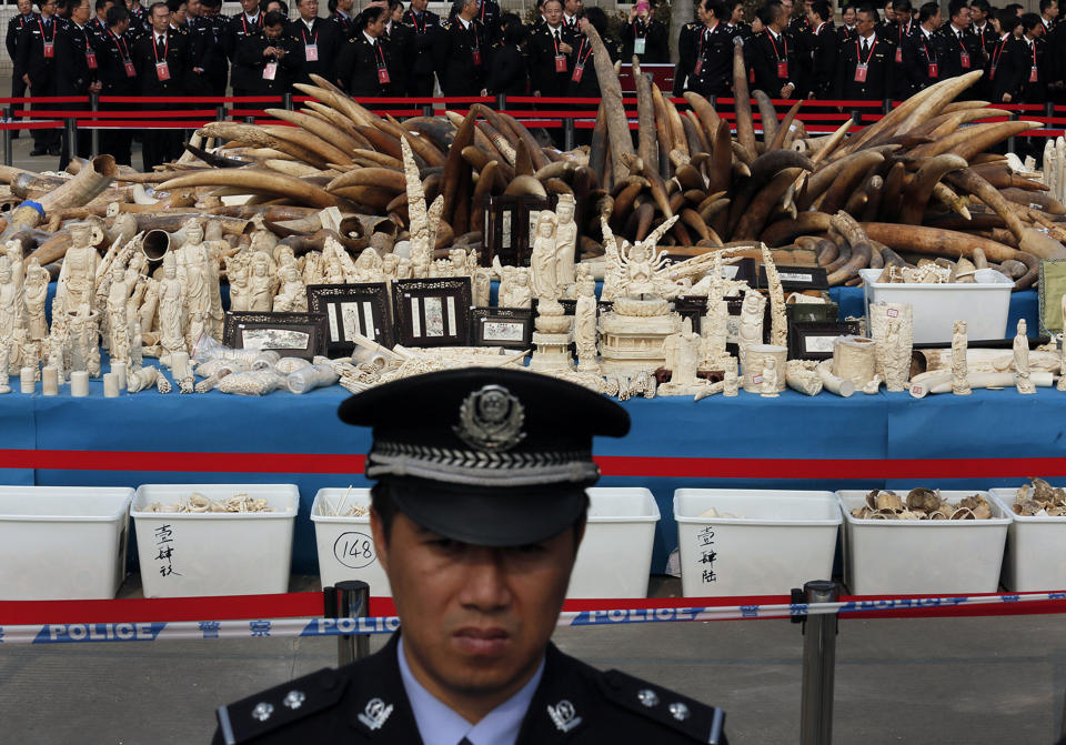 Ivory Prices Soar in China on New Demand: Report