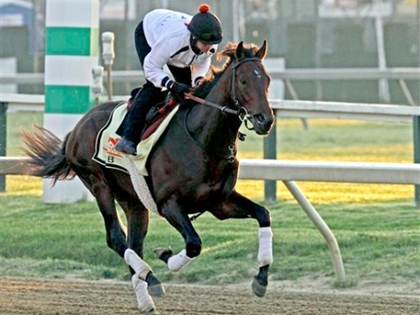 Orb Favored to Take Preakness