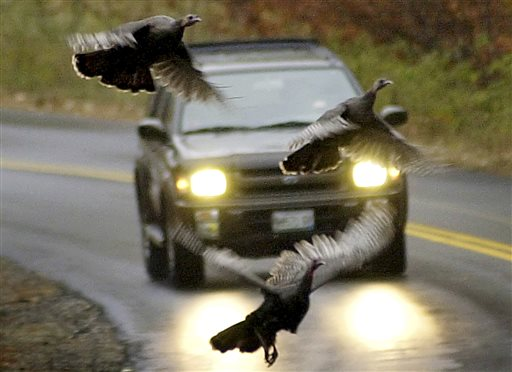 Maine Expands Hunting to Stop Turkeys Gone Wild