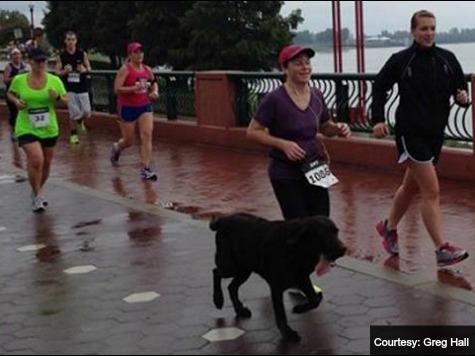 Indiana Dog that Crashed Half-Marathon Gets Medal