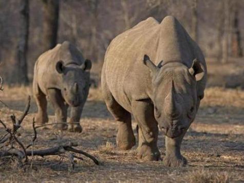 DSC Black Rhino Hunter Rebuffs Bob Barker: No Bob, 'The Price Is Wrong!'