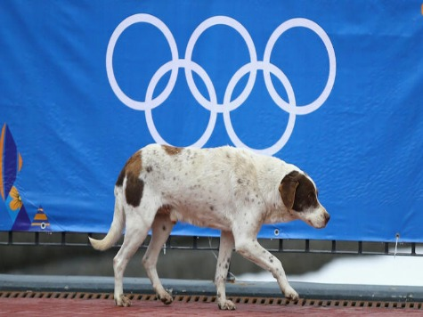 Sochi Stray Dogs Receive Shelter During Olympics; One Found at Opening Ceremony