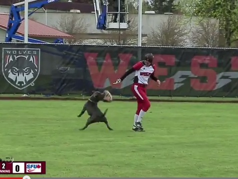 Dog Steals Mitt and the Show During Softball Game