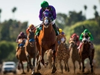 California Chrome Derby Favorite, Will Attempt to Be First Cal-Bred Horse to Win in 52 Yrs