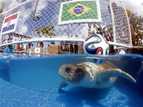 Meet Big Head, the 2014 World Cup Animal Psychic in Brazil