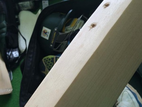 TSA Officials Destroy New Zealand Cricketer's Bat to Look for Drugs