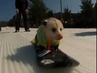 Ratatouille The Snowboarding Opossum