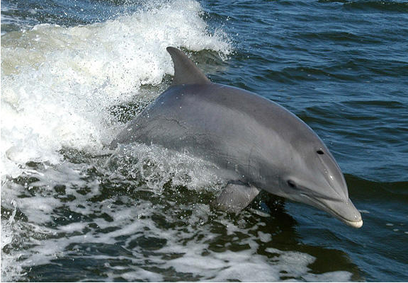 Over 600 Dolphins Found Mysteriously Dead