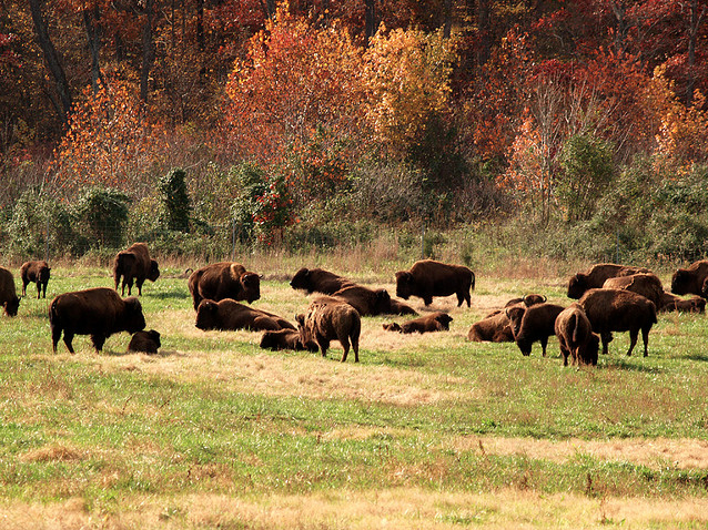 Ted Turner Offers To Donate 20 Bison To Boulder