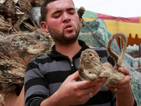 Stuffed Animals Join Live Ones In Gaza Zoo