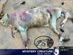 Mysterious Creature Washes Up On Seal Beach