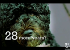 Obama's Anti-Dog Super PAC Ad Spoof