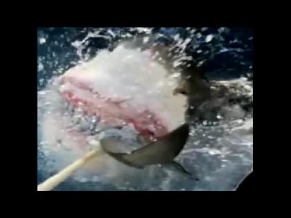 JAWS: Great White Shark Attacks Australian Fishing Boat
