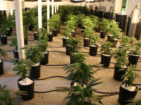 COPS: Men Break Into House, Steal Marijuana Plants