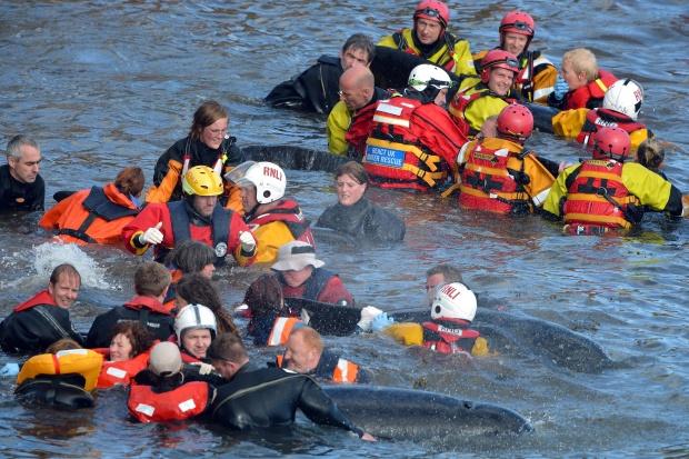 16 Whales Die In Mass Stranding Off Scottish Coast