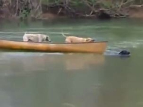 Dog Saves His Two Friends Stuck In Canoe