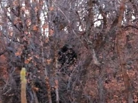 Video:  Bigfoot Sighting?
