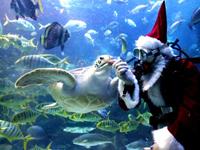 WATCH: Scuba Diving Santa In Mexico