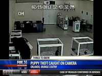 Woman Steals Puppy, Places In Purse