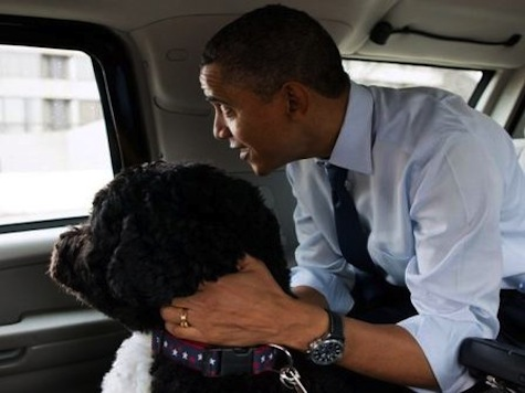Bo Obama Keeps His Motorcade Through Sequester Cuts