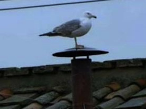 Pelosi: Seagull On Smokestack Was Sign San Francisco Approved New Pope
