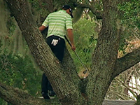 WATCH: Pro Golfer Climbs Tree, Hits Ball Off Limb