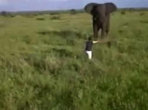 WATCH: Drunk Tourist Charges at Elephant