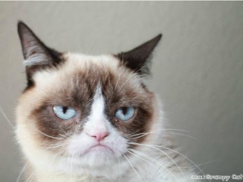 Grumpy Cat to Star in Feature Film