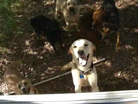 Rescued Dogs Make It Through Oklahoma Tornado