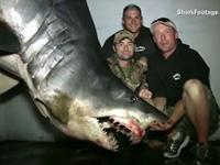 Fishermen Catch 1,300lbs Shark