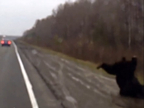 Must-See: Russian Driver PLOWS into Bear