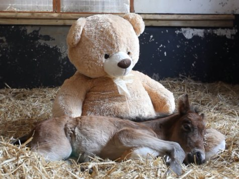 Watch: Orphaned Pony Cuddles with Giant Teddy Bear