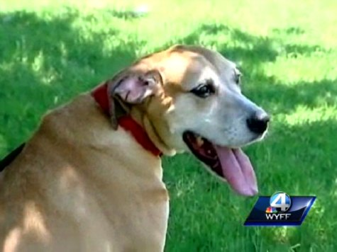 Boy Halts Burial of Own Dog to Rescue Another