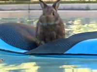 WATCH: Bunnies Go Swimming to Beat the Heat