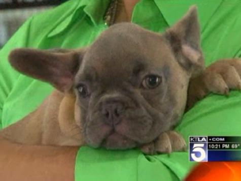 Man Accused of Swinging Bulldog Puppy 'Like Yo-Yo'