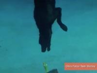 WATCH: Dog Dives Nine Feet Underwater, Saves Rubber Chicken