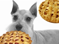 Man Offers Year's Worth of Pies for Missing Dog