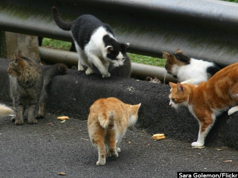Gangs of Feral Cats Terrorizing France