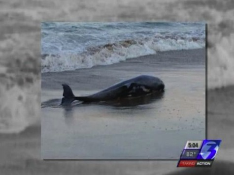 Dolphins Washing Up On Virginia Beaches At Alarming Rate