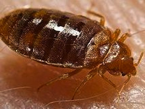 Health Department Infested With Bed Bugs
