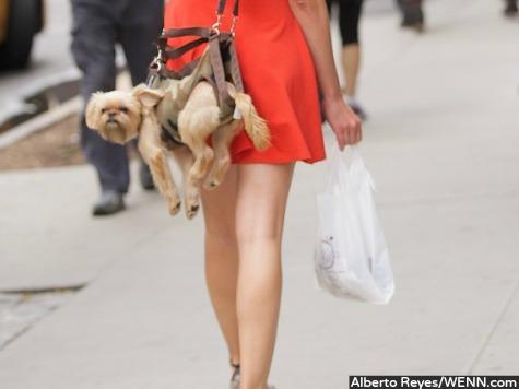 'Puppy Purse' Accessories Cause Controversy