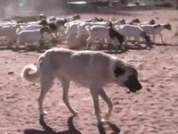 Namibia Calls In Dogs to Make Peace Between Farmers, Cheetahs