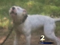 Man Says He Was Arrested for Unchaining Neglected Dog