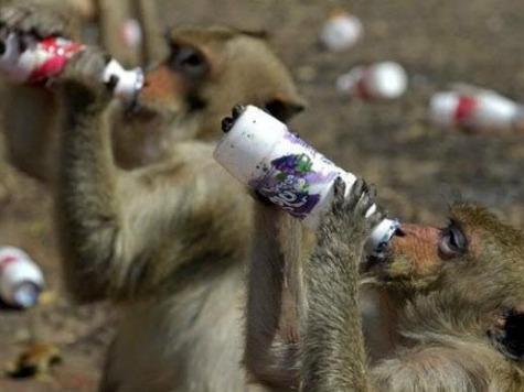 Thai Village Under Siege from Marauding Monkeys