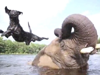 WATCH: Adorable Elephant and Dog Play Catch