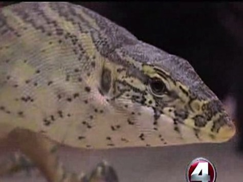 Wild Lizards Eating Family Pets in Florida