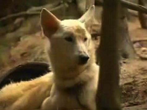 Woman Convicted of Animal Abuse Eaten by Own Dogs
