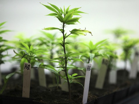 Shoplifters Unwittingly Lead Police to Their Pot Farm