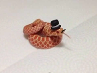 Owner Puts Tiny Hats, Mustaches On Snakes To Make Less Scary